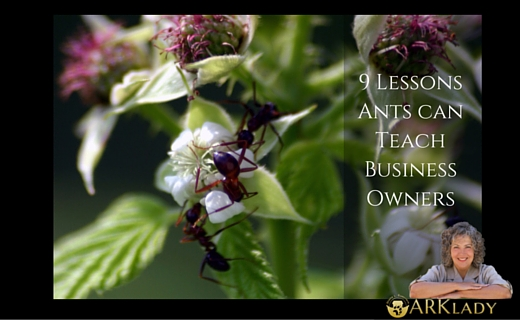 What Ants Can Teach Business Owners @TheArkLady
