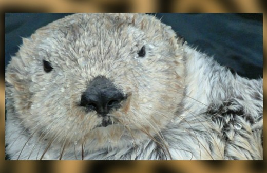 What otters can teach you about…