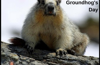 What A Groundhog Can Teach Business Owners