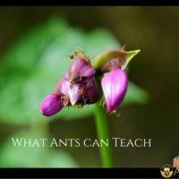 What Ants Can Teach