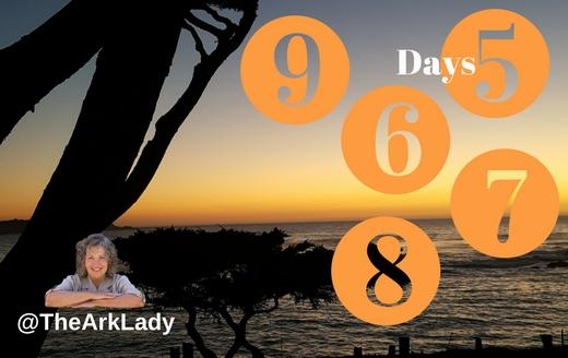 DianaLGuerrero -@TheArkLady #DivinelyOrchastratedLife Days 5-9