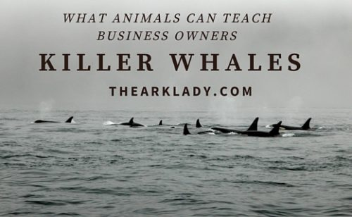 What Killer Whales Can Teach Business Owners