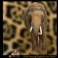 What Hauling Elephant Can Teach Business Owners