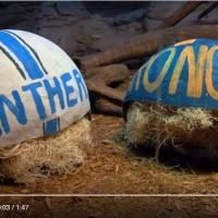 Zooper Bowl & Real Marketing Animals